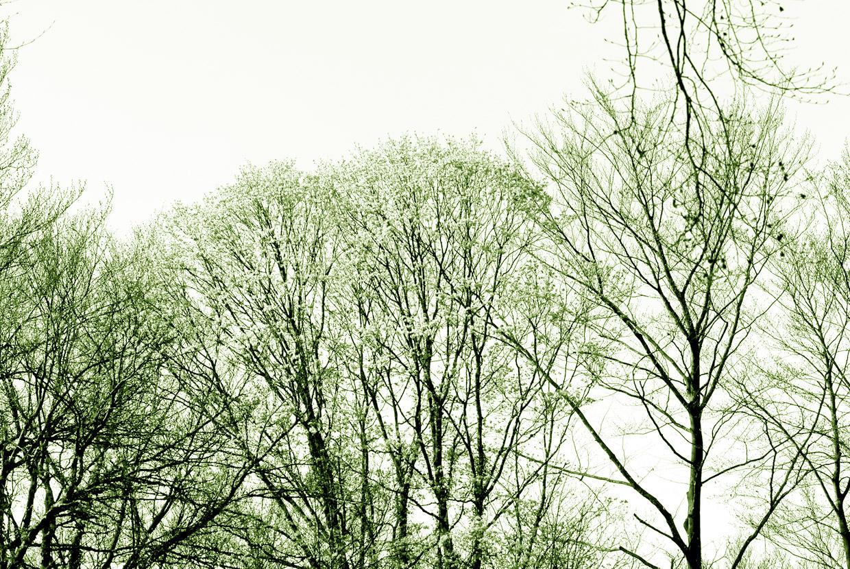 arbres_site